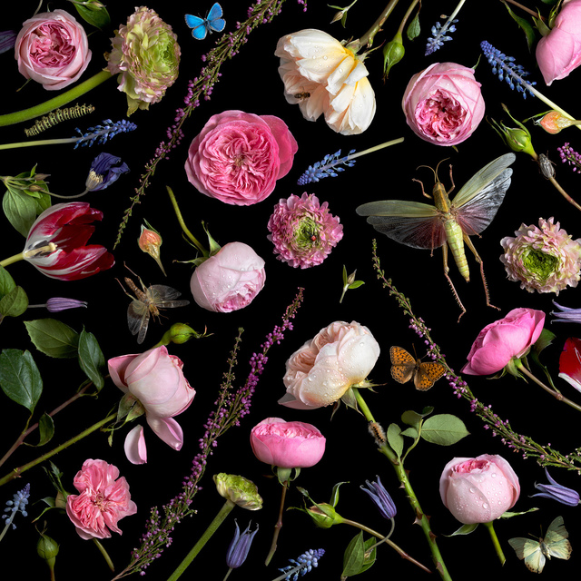 , 'Botanical VI (Juliet Roses),' 2013, Robert Mann Gallery