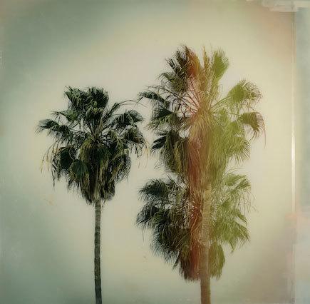 , 'California Palms,' 2018, Kahn Gallery