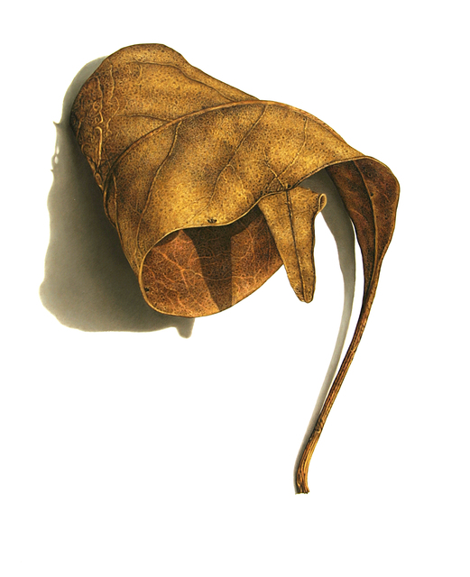 , 'Rusted Leaf Series No. 3,' 2006, Garvey | Simon