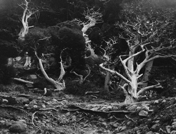 , 'Point Lobos,' 1940, Weston Gallery