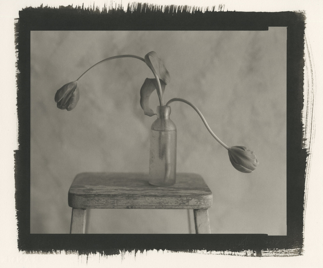 Kenro Izu, 'Still Life 1247', 2012, Photography West Gallery