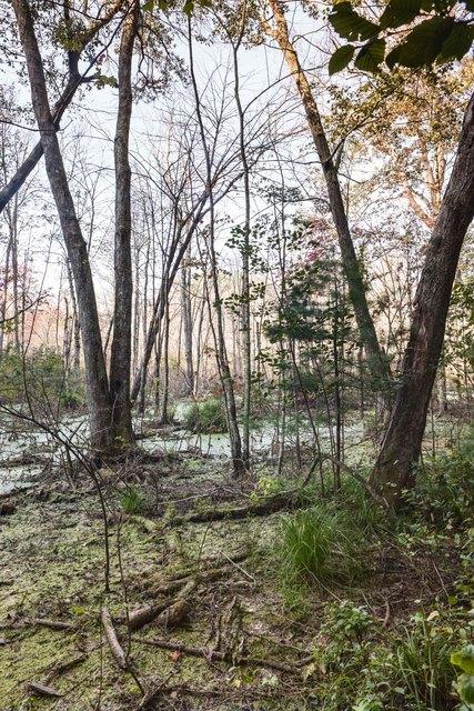 , 'Beaver Swamp, Fall #2,' 2013, 555 Gallery