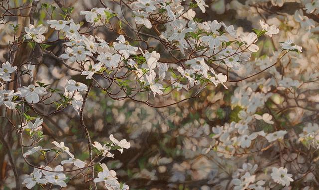 Jeffrey Vaughn, 'Flowering Dogwood', 2018, George Billis Gallery