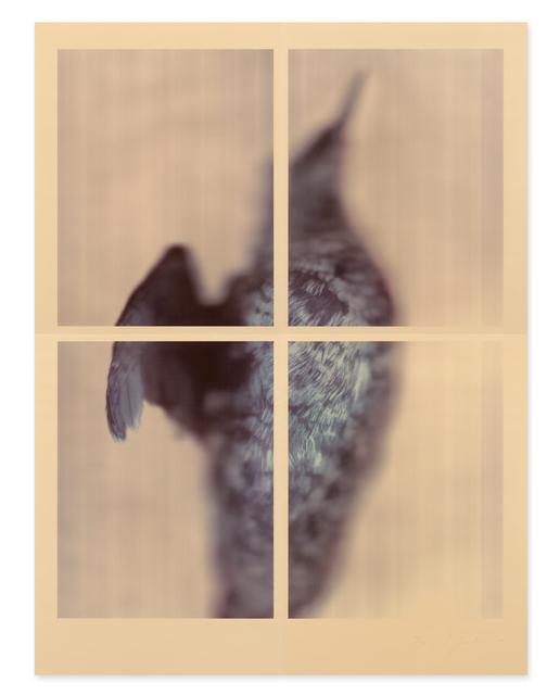 , 'Pigeon Guillemot,' 2017, Gemini G.E.L. at Joni Moisant Weyl